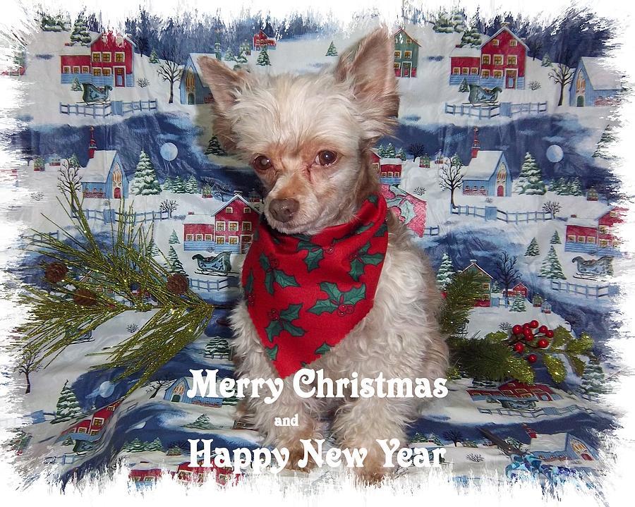 Canine Photograph - Fanci by Rosalie Klidies