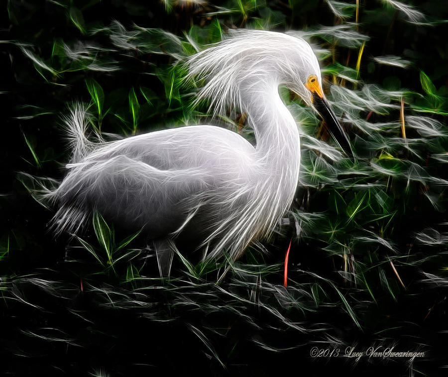 Egret Photograph - Fancy Feathers by Lucy VanSwearingen