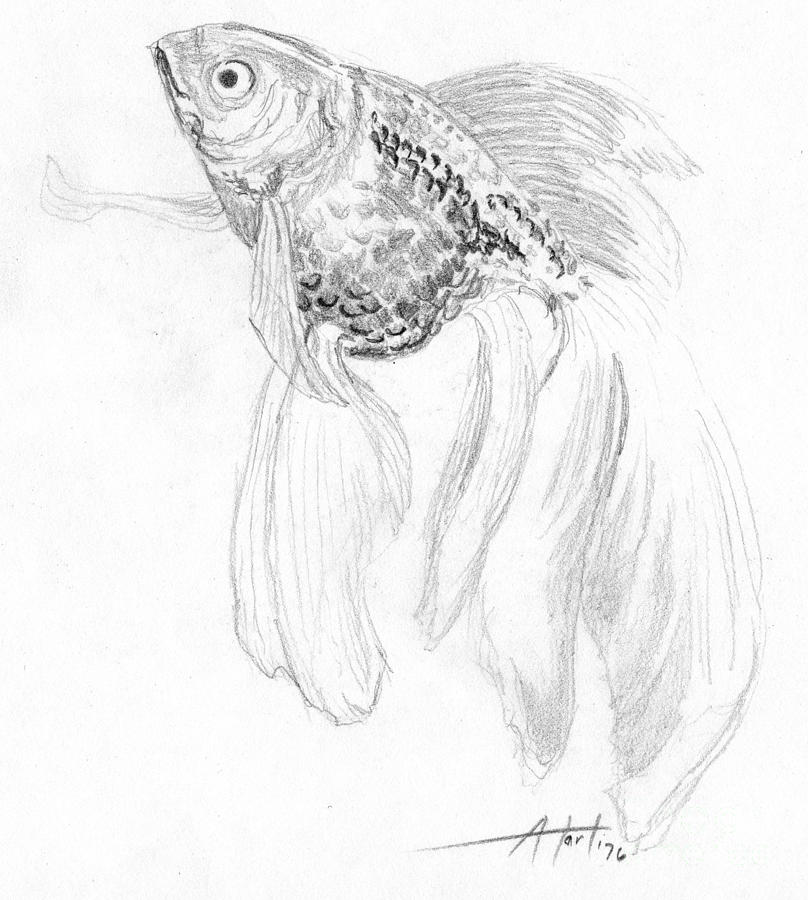 fish drawing fancy goldfish by audrey van tassell