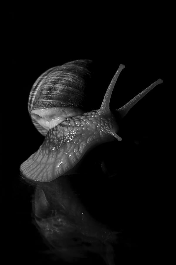 Snail Photograph - Fancy Move by Marius Ioan Groza