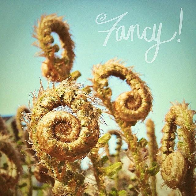 Ferns Photograph - Curly Fern Fronds by Blenda Studio