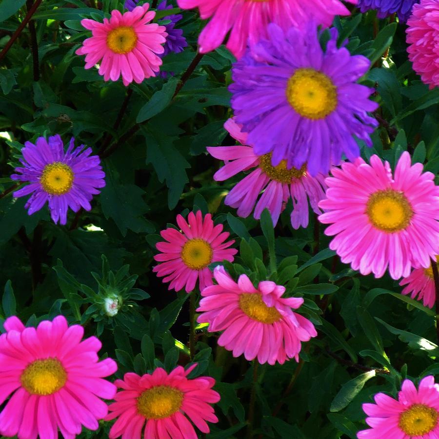 Pink Photograph - Fantasia by Alison Richardson-Douglas