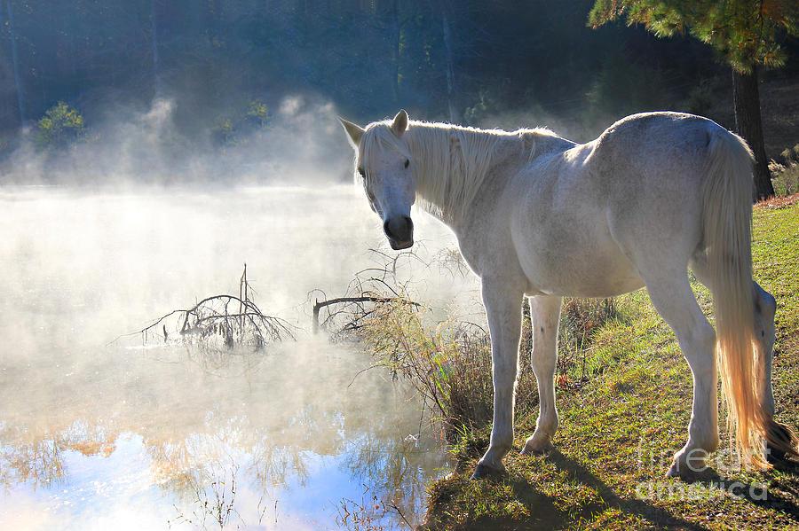 Fog Photograph - Fantasy Fog by Leslie Kirk