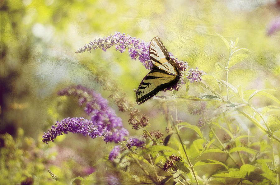 Butterfly Photograph - Fantasy Garden Series II by Kathy Jennings