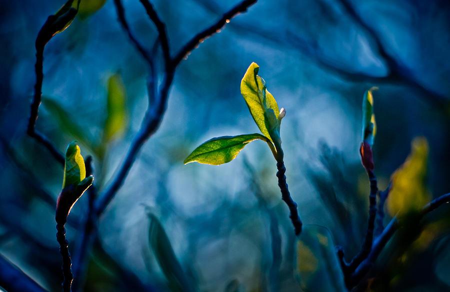 Blue Digital Art - Fantasy In Blue by Linda Unger
