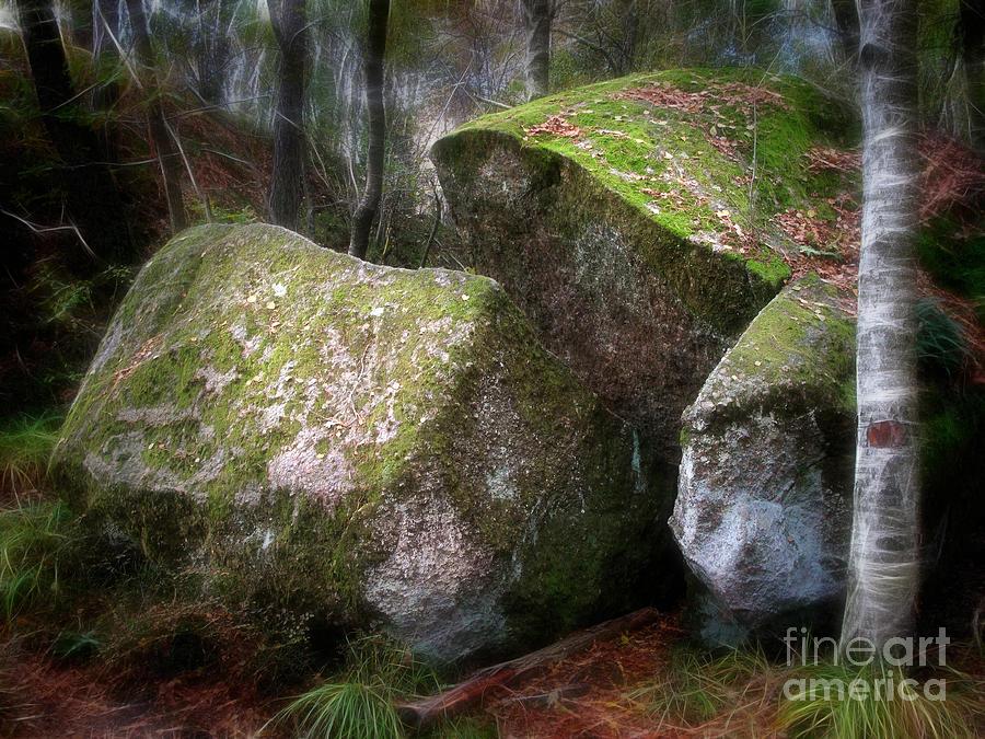 Wood Photograph - Fantasy Woods by Lutz Baar