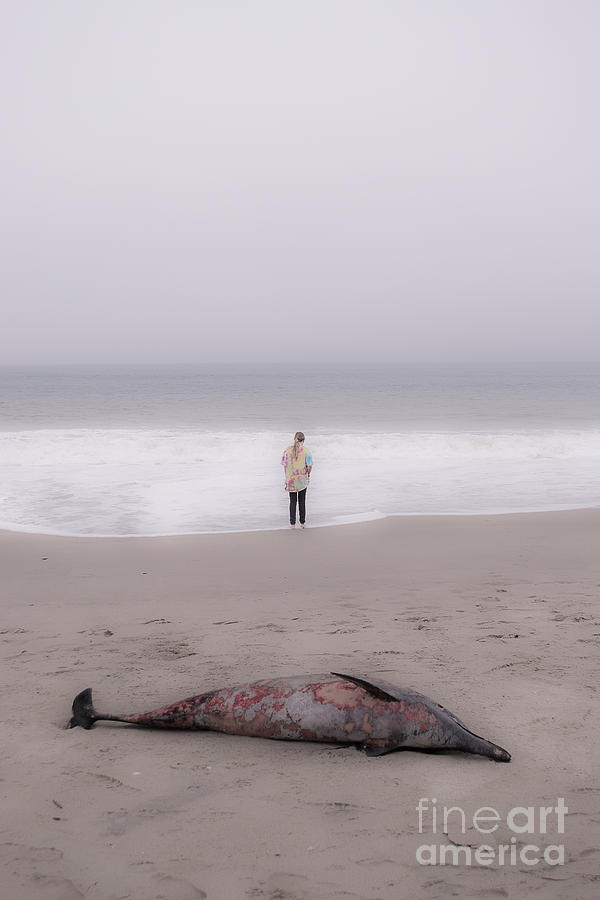 Demise Photograph - Farewell by Patty Descalzi