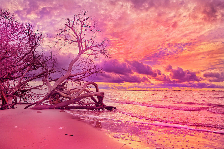 Jekyll Photograph - Farewell To The Day by Betsy Knapp