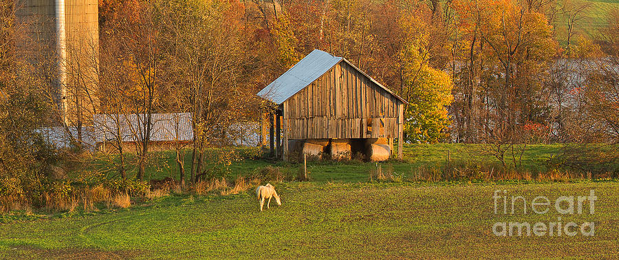 Michele Photograph - Farm At Sunrise by Michele Steffey