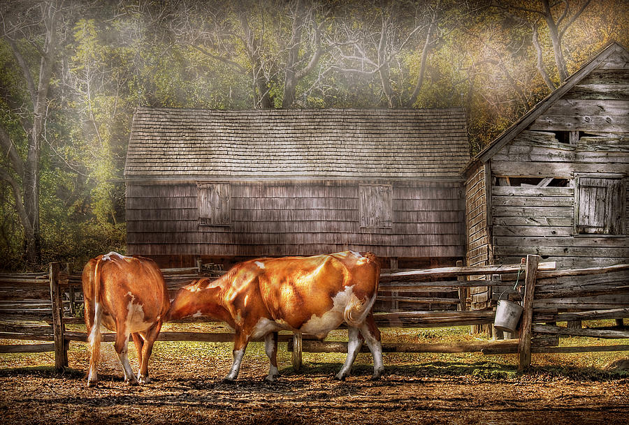 Savad Photograph - Farm - Cow - A Couple Of Cows by Mike Savad