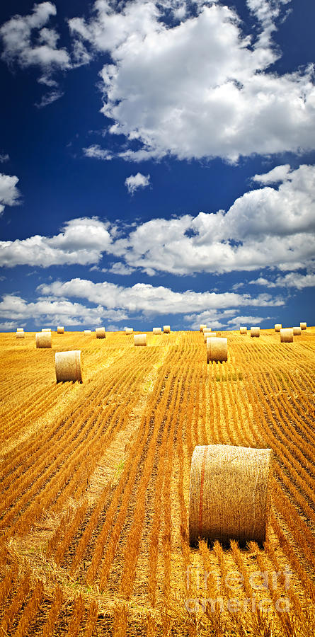 Agriculture Photograph - Farm Field With Hay Bales In Saskatchewan by Elena Elisseeva