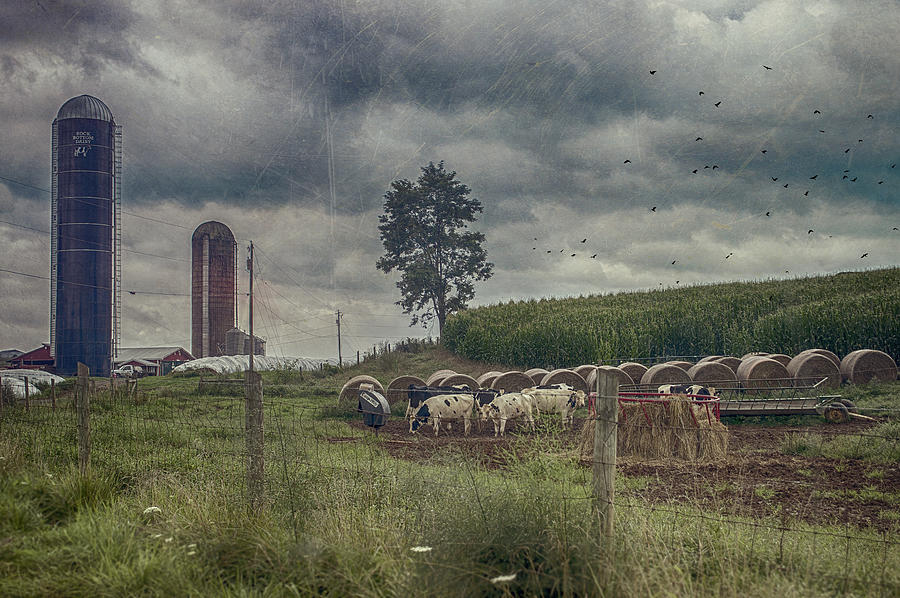 Farm Photograph - Farm Landscape by Kathy Jennings