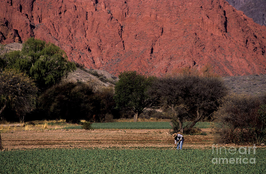 Argentina Photograph - Farmer In Field In Northern Argentina by James Brunker