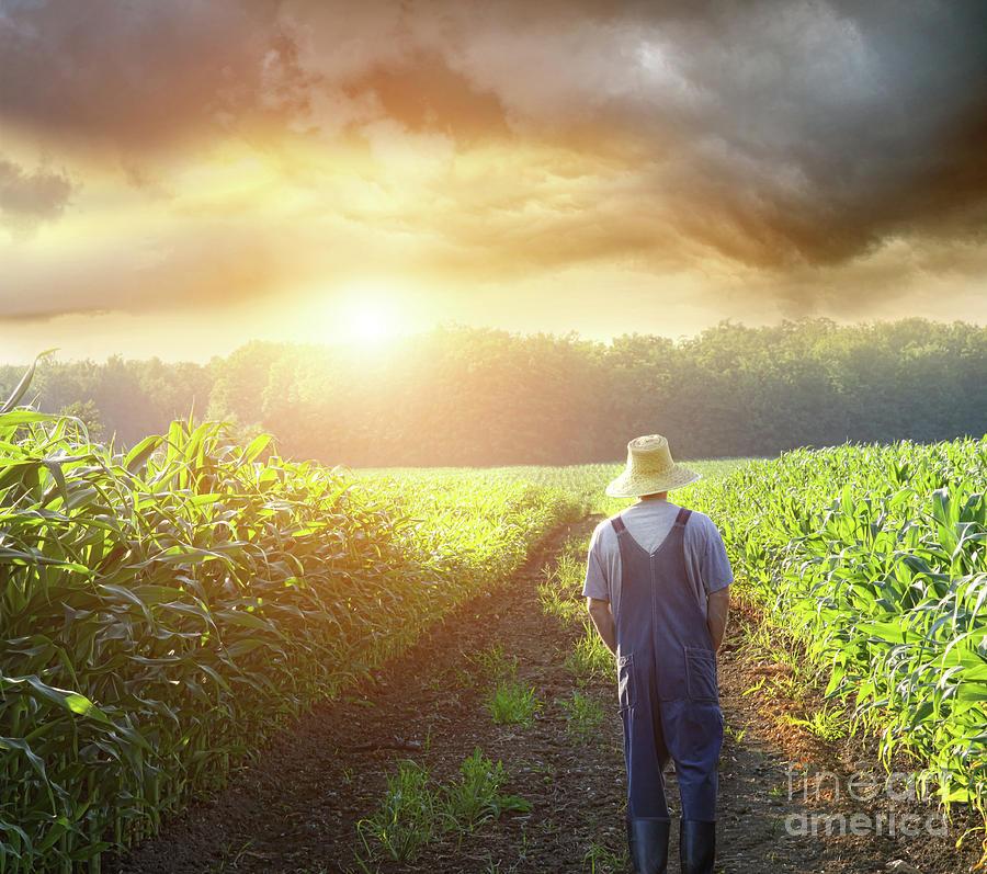 Alone Photograph - Farmer Walking In Corn Fields At Sunset by Sandra Cunningham