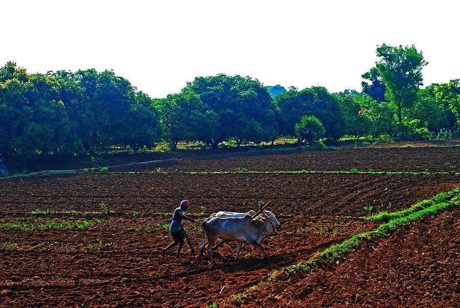Farmer with cow Photograph by Gopan G Nair