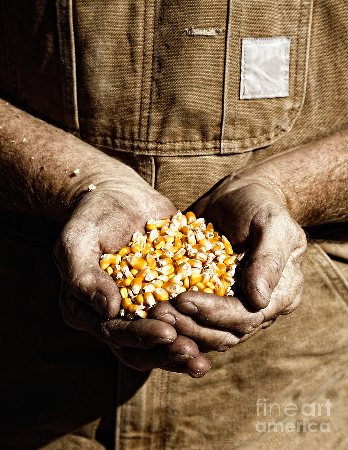 Farm Photograph - Farmers Hands With Seed Corn by Lincoln Rogers