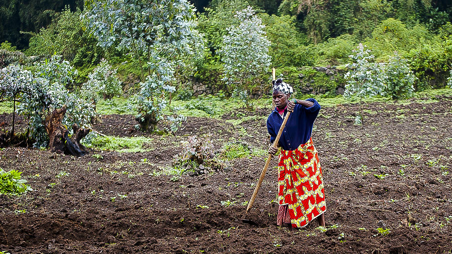 Rwanda Photograph - Farmlady by Paul Weaver