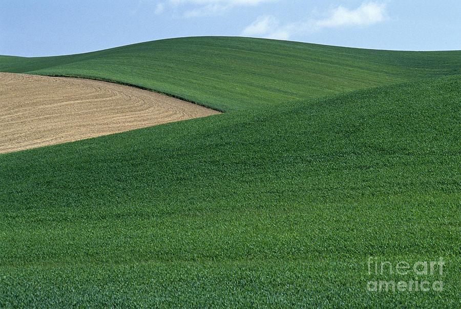 Farmland Crops Photograph