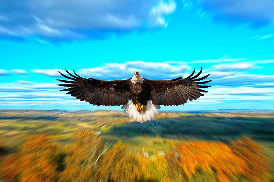 Eagle Photograph - Father Restore Our Land by Randall Branham
