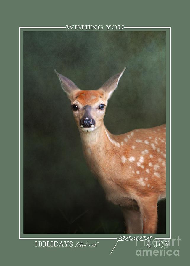 Fawn Baby Deer Wildlife Christmas Cards Photograph by Jai Johnson