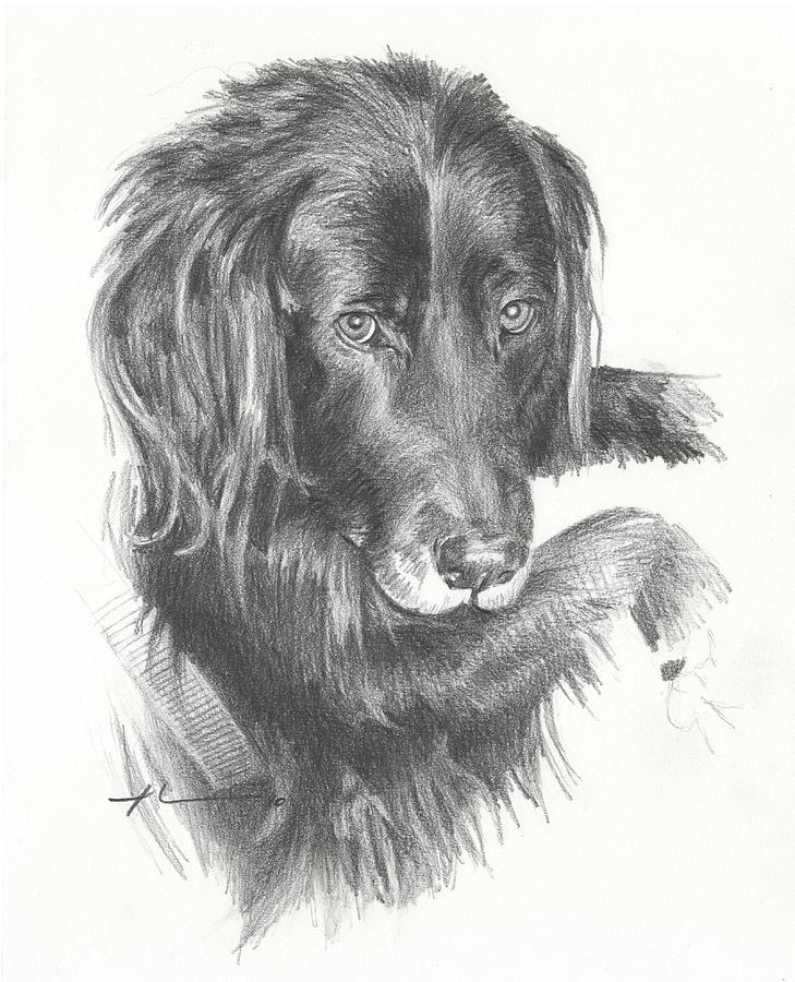 Black Dog Laying Pencil Portrait Drawing by Mike Theuer