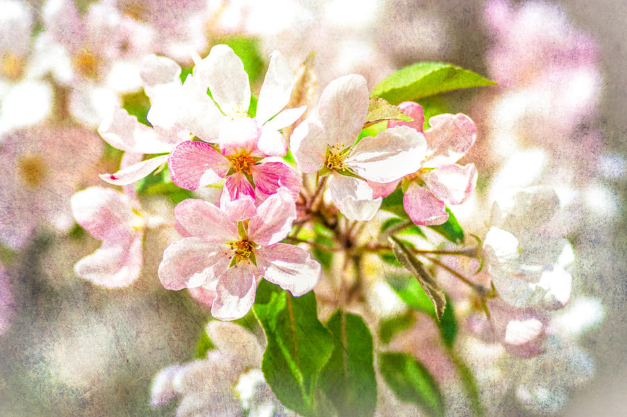 Flower Photograph - Feast Of Life 16 - Love Is In The Air by Alexander Senin
