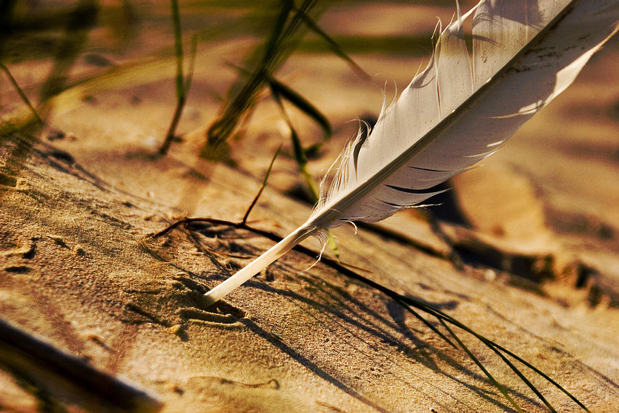 Outdoor Photograph - Feather And Sand by Raimond Klavins
