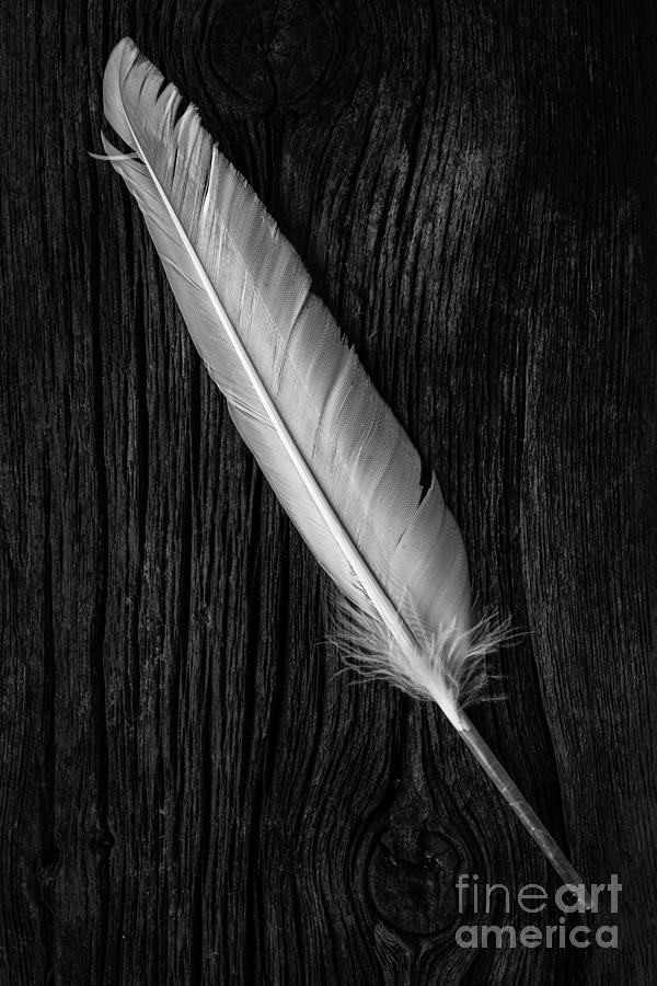 Bird Photograph - Feather by Edward Fielding