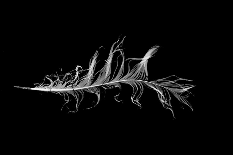 feather I by Jeremiah John McBride