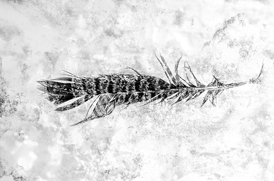 Feather Photograph - Feather In The Snow by Sue Capuano
