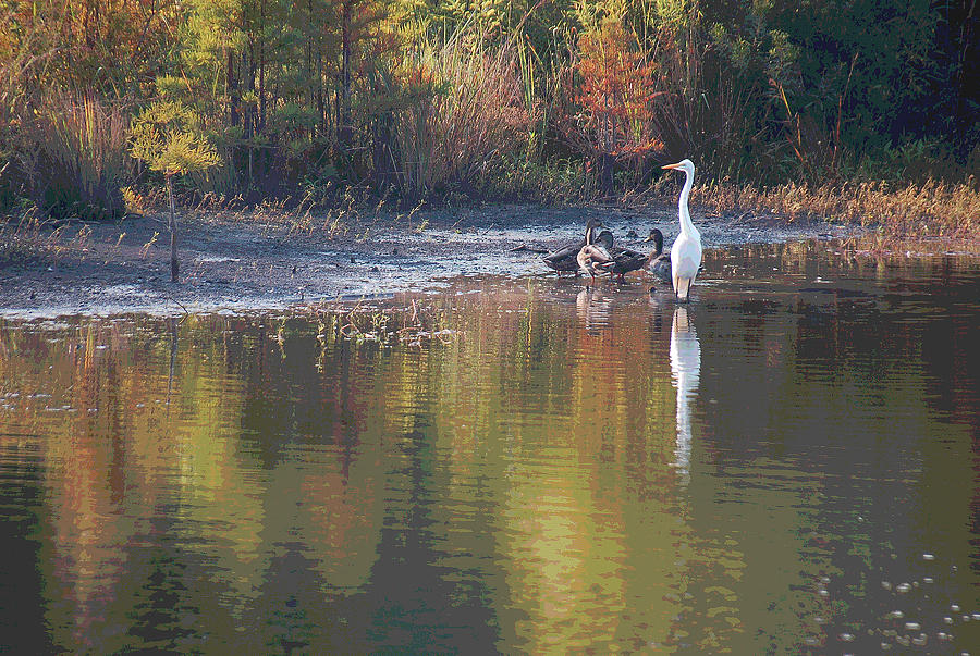 Egret Photograph - Feathered Friends by Suzanne Gaff
