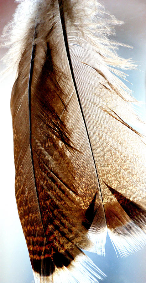 Feathers 22393 Photograph