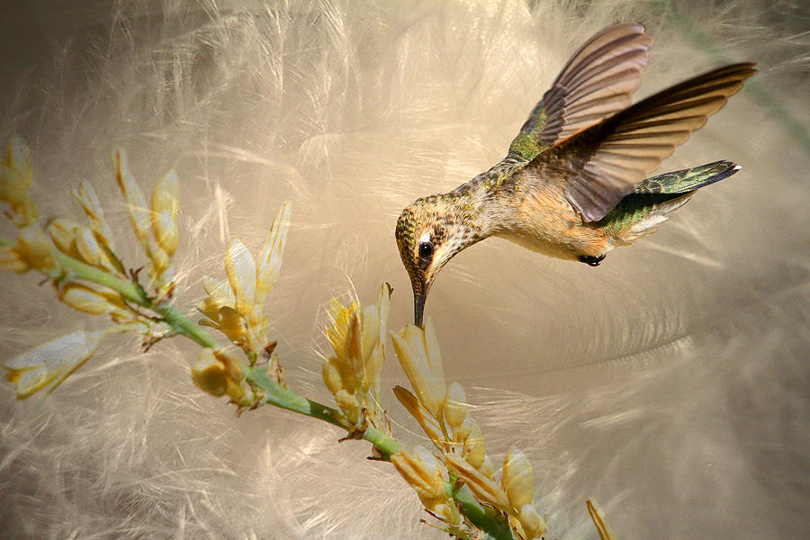 Hummingbird Photograph - Feathers by Donna Kennedy