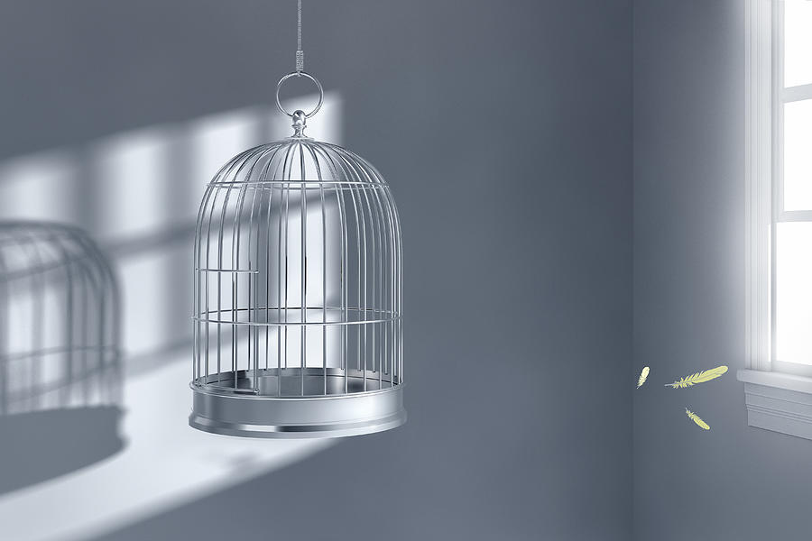 Feathers floating near empty birdcage Photograph by Chris Clor