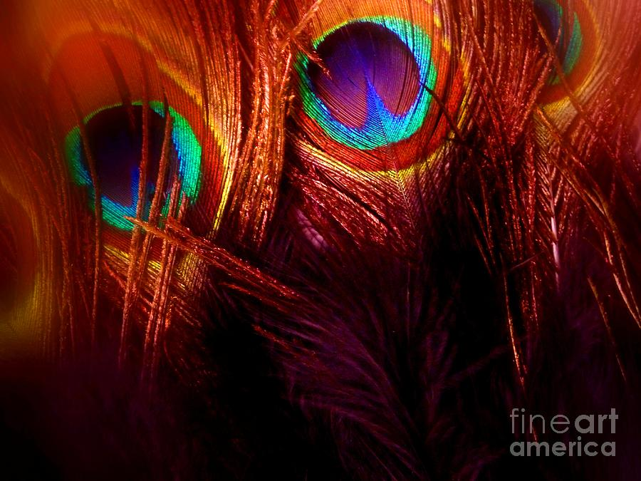 Abstract Photograph - Feathers by Newel Hunter