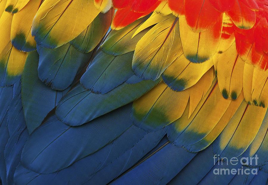 Nikon Photograph - Feathery Details... by Nina Stavlund