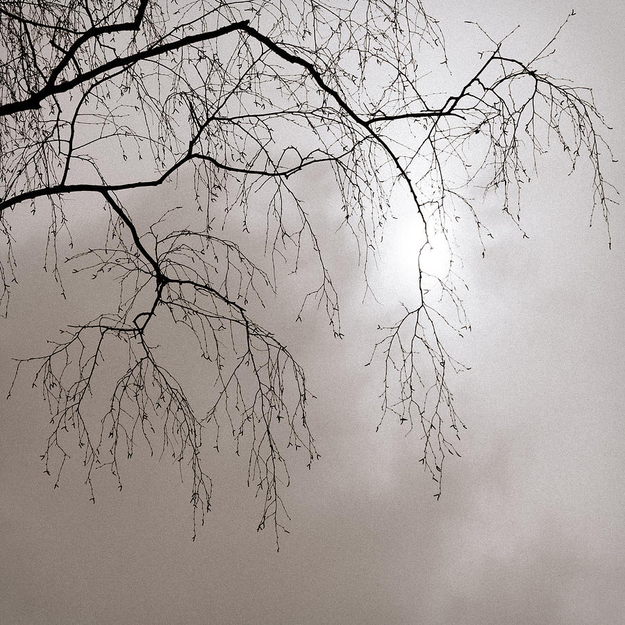 Abstract Photograph - February Sun - Featured 3 by Alexander Senin