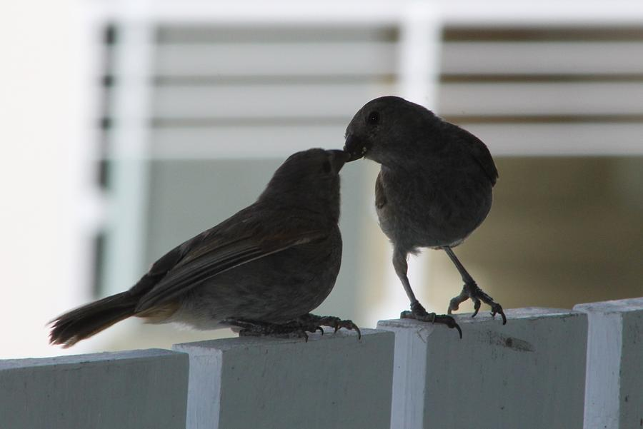 Birds Photograph - Feed Me by Catie Canetti
