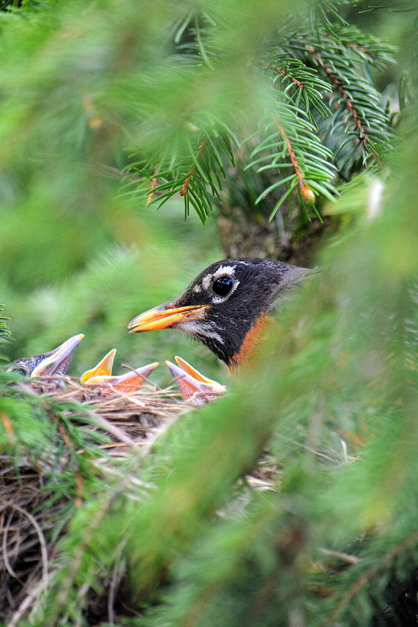 Bird Photograph - Feed Me Three by Emily Stauring