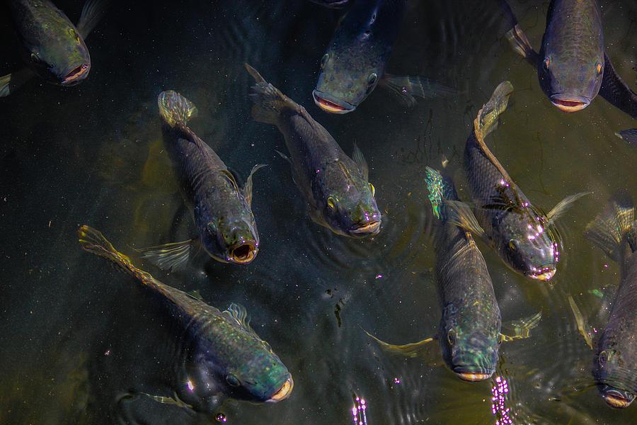 Fish Photograph - Feed Meeeeee First by Lesley Brindley