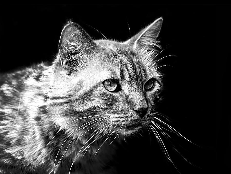 Cat Photograph - Feline by Camille Lopez