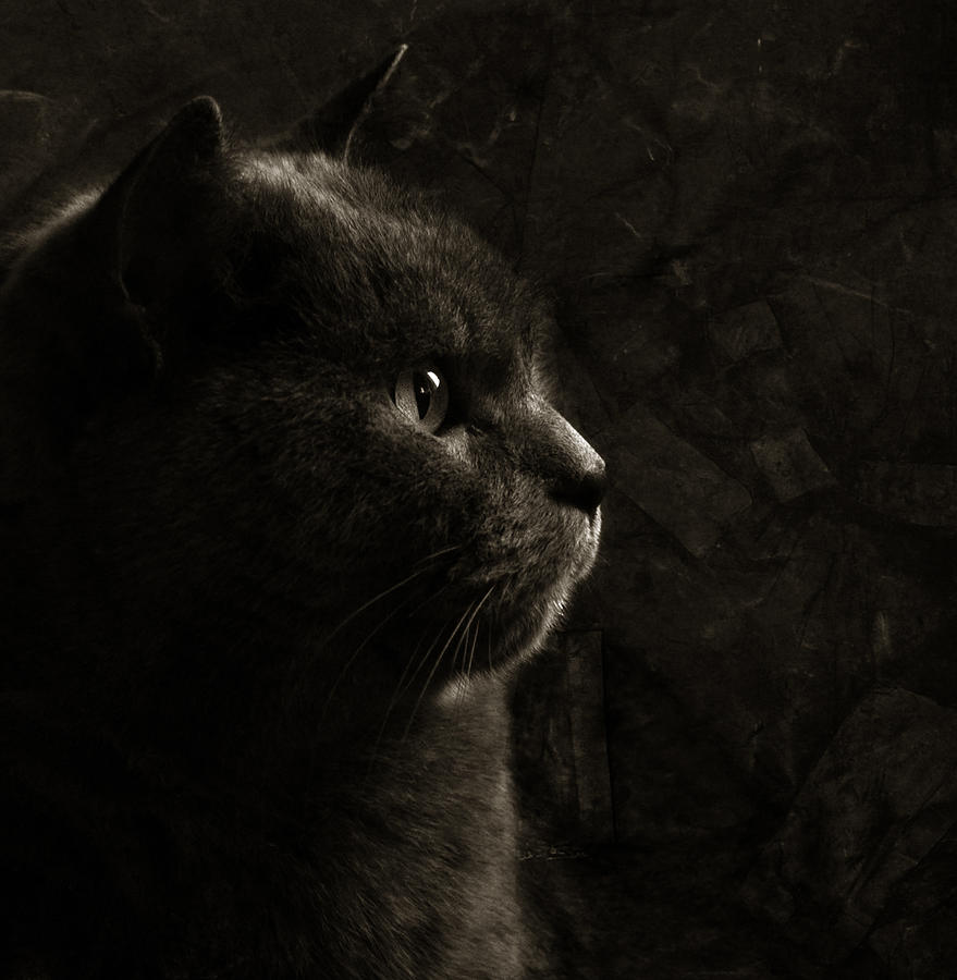 Cat Photograph - Feline Perfection by Laura Melis