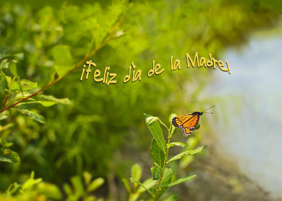 Feliz Dia De La Madre Mariposa Photograph