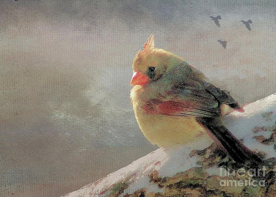 Songbird Photograph - Female Cardinal V by Janette Boyd