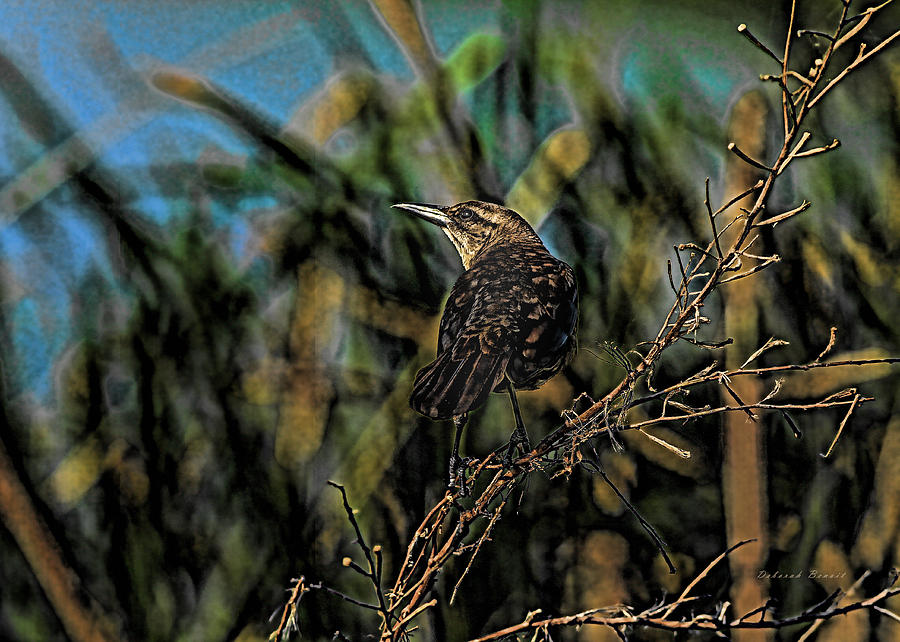 Grackle Photograph - Female Grackle On The Dark Side by Deborah Benoit
