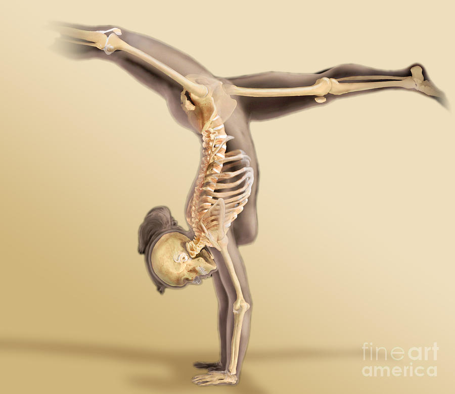 Body Scan Photograph - Female Skeletal System by Anatomical Travelogue