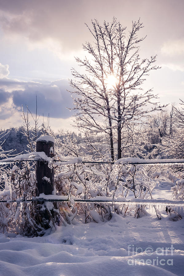 Trees Photograph - Fence And Tree Frozen In Ice by Elena Elisseeva