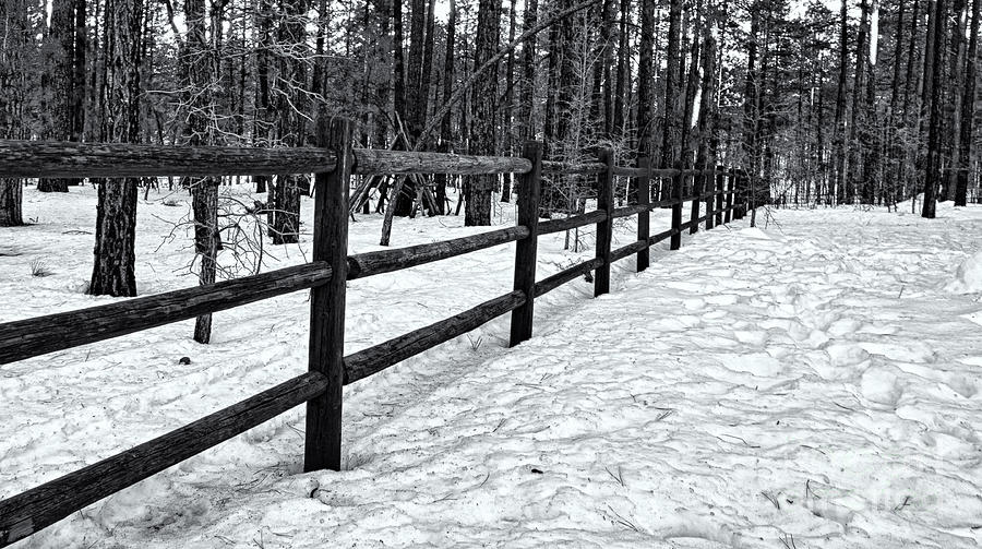 Fence In Winter 06 Photograph
