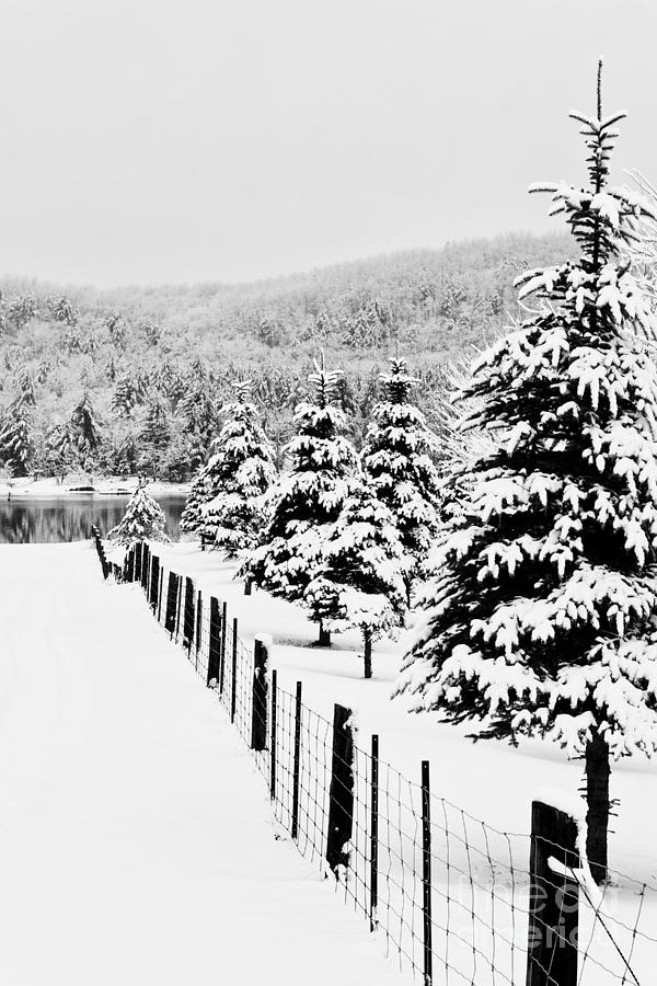 Winter Photograph - Fence Line by Tim Wilson