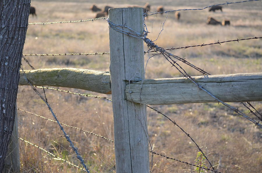 Barbed Wire Photograph - Fenced by Kelly Kitchens